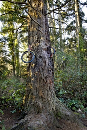 Bicycle lodged in tree in forest