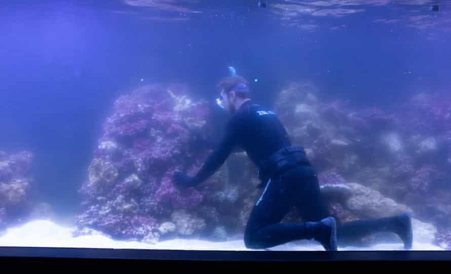 Jeremy Simmons, London Zoo's senior aquarist, puts coral into the Tiny Giants' main tank