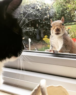 Squirrel peering into window as cat looks out