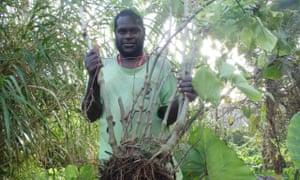 Kava farmer