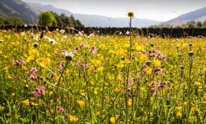 A wildflower meadow