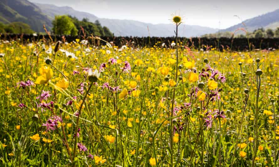 Wild flowers in the Lake District