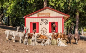 Horses, goats and llamas are among the animals posing around this hut