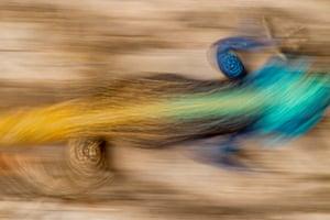 Lizard – chameleon? – moving fast