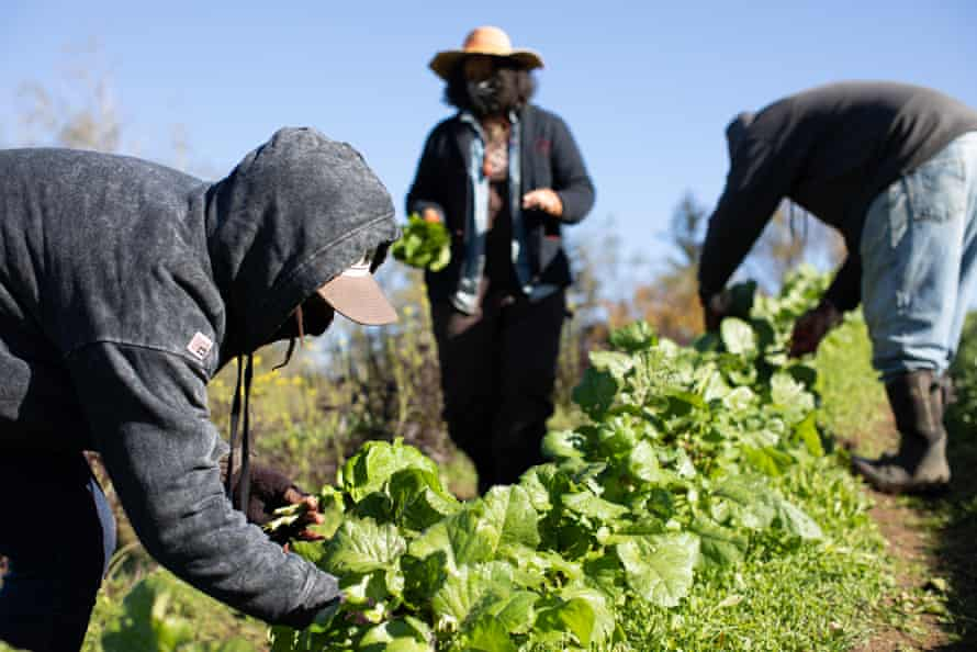 Just 45,000 of the 3.4 millions farmers in the US are Black, according to the 2017 Census of Agriculture.