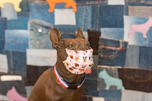 A French bulldog statue in Brisbane displays a homemade surgical mask to raise awareness of Covid-19 crisis.