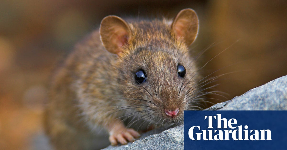 The world's greatest rat catcher? Behind one man's 50-year crusade