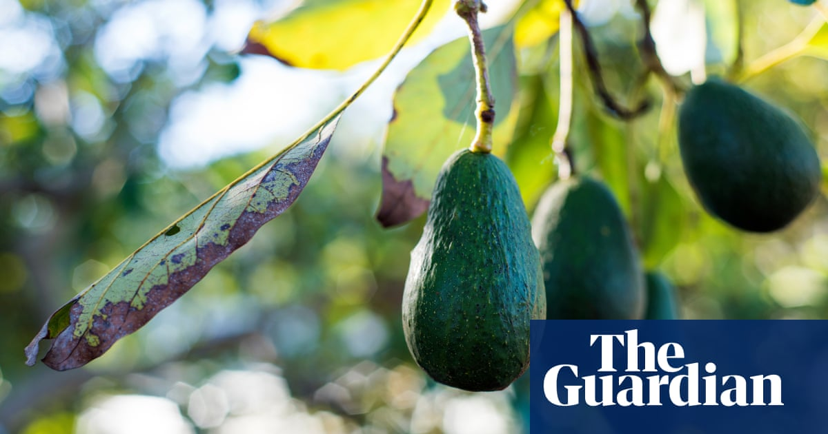 Emergency avocados: why do people need the much-mocked fruit at mega-short notice?