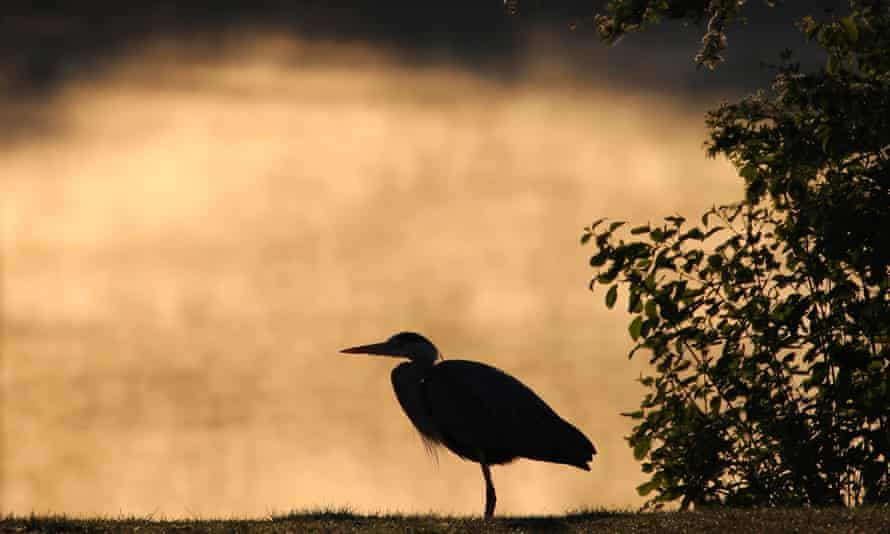 heron on riverbank