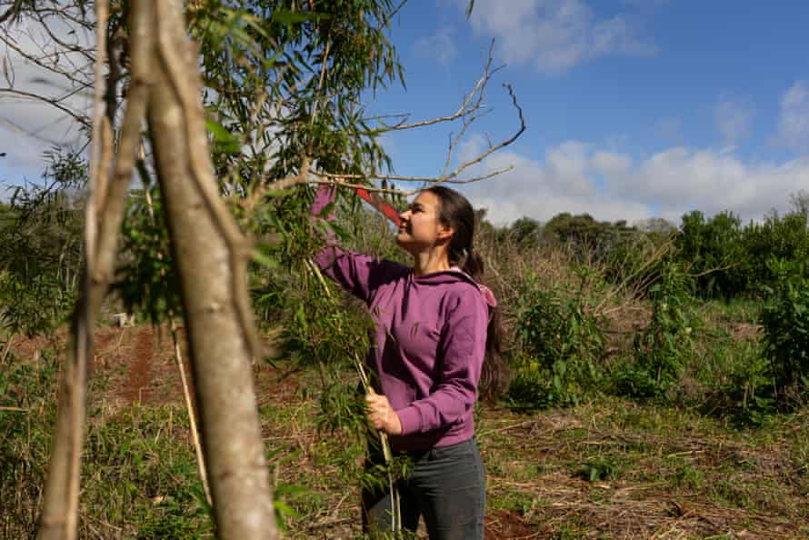 Celia Motta is a member of Onondive, Onoiru's women's committee. She produces two essential raw materials; yerba mate and medicinal plants.