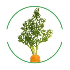 Carrot top cut-out inside green-rimmed circle