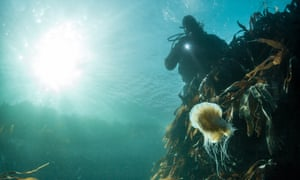The new restaurant is an 'underwater laboratory' for marine researchers at the local university.