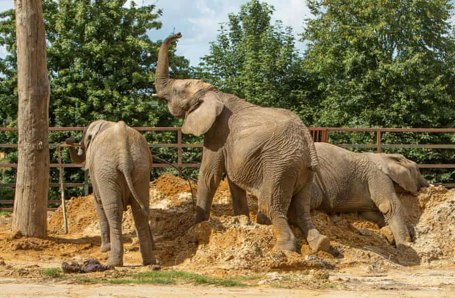 Elephants at Howletts Wild Animal Park