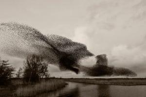 Photographs of starling murmurations from the book Black Sun by Copenhagen-based photographer Soren Solkaer.