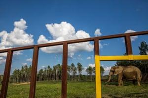 An elephant seen through bars at the Elephant Sanctuary.
