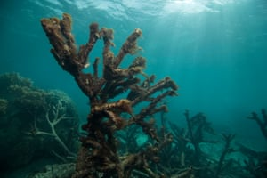 Dead and dying coral