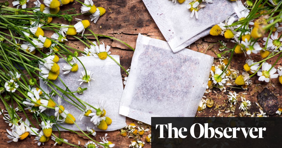 Chamomile lawn? Begin with a teabag