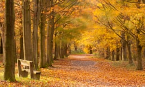 Beacon Hill country park, the National Forest, Leicestershire