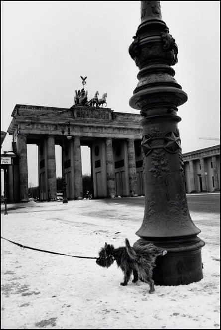 A photograph of Erwitt's dog