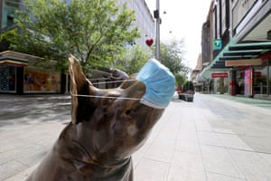 A pig statue obeying the requirement to wear a fae mask in Rundle Mall in Adelaide.