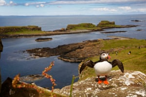 Puffins nest on the Treshnish Isles