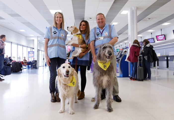 Therapy dogs bound into Aberdeen airport to alleviate stress