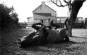 Red Rum enjoyed a long retirement, and died at the age of 30 in 1995. He is buried at the Aintree winning post