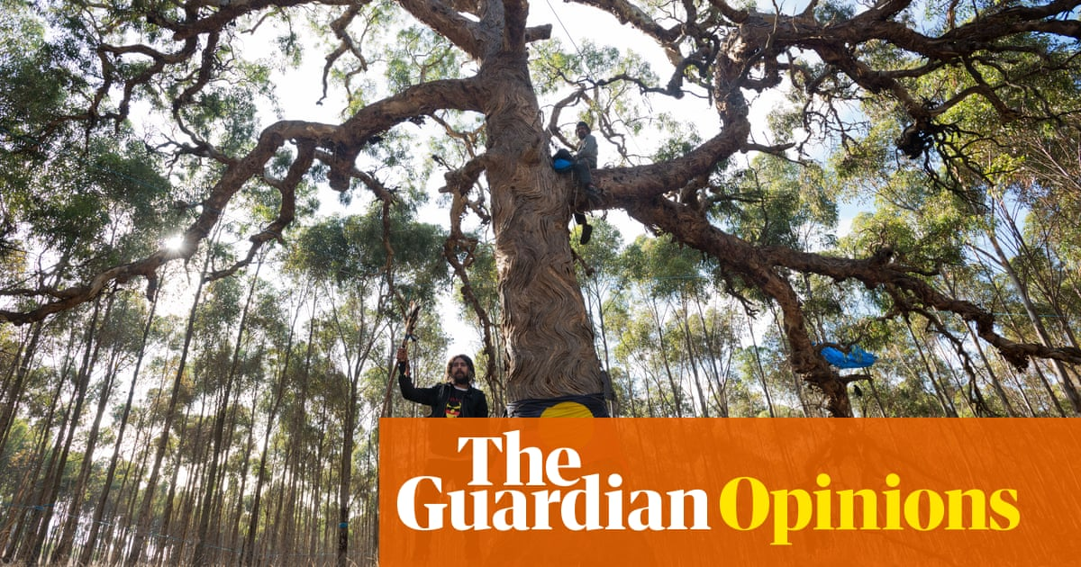 The government wants to bulldoze my inheritance: 800-year-old sacred trees | Nayuka Gorrie
