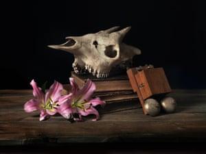 okapi skull with electric bell