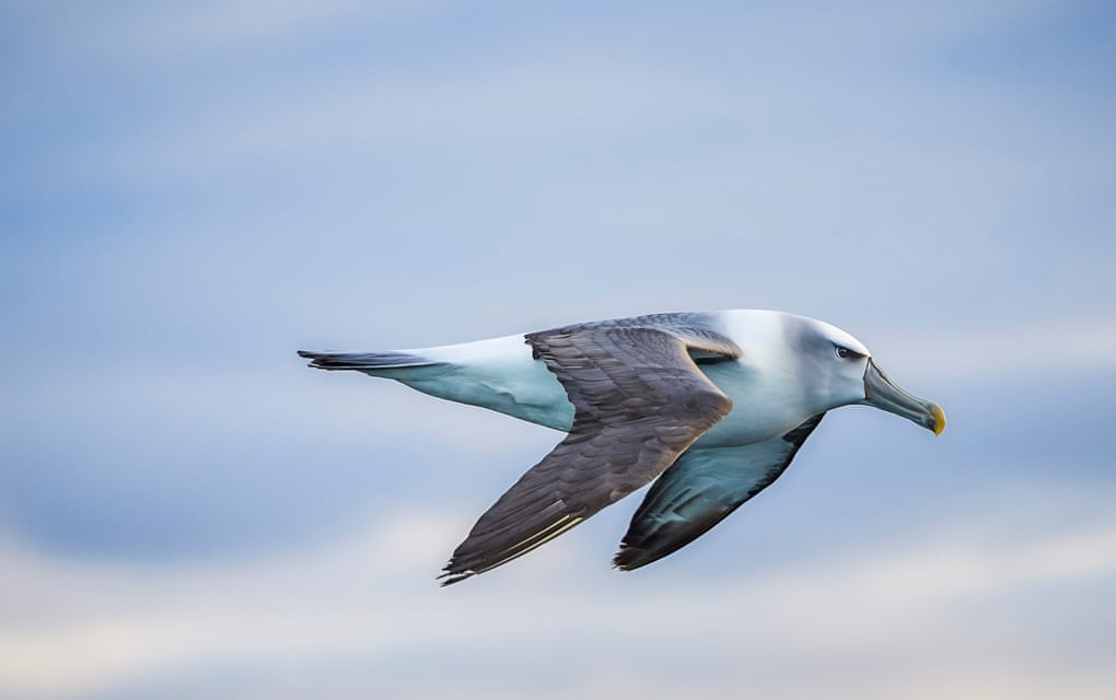 Avian eye: how to take photos of birds that stand out from the flock