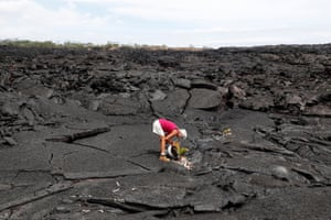 Diane Cohen, 64, whose home in Kapoho was covered with lava last summer when the Kilauea volcano erupted, plants a coconut tree where her property once stood.
