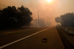 A rabbit crosses a road to escape smoke and flame as firefighters work to contain the Bond fire near Lake Forest, California
