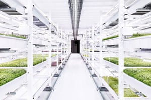 Growing Underground farm, London – up and running