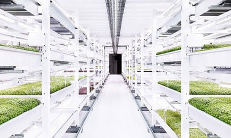 Can 'agritecture' make cities self-sufficient? – in pictures