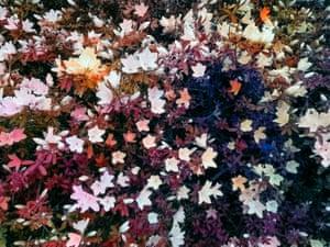 Bloom (#5f5554), 2020, by Trevor Paglan.