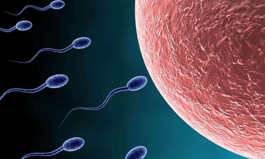 Sperm approach an egg