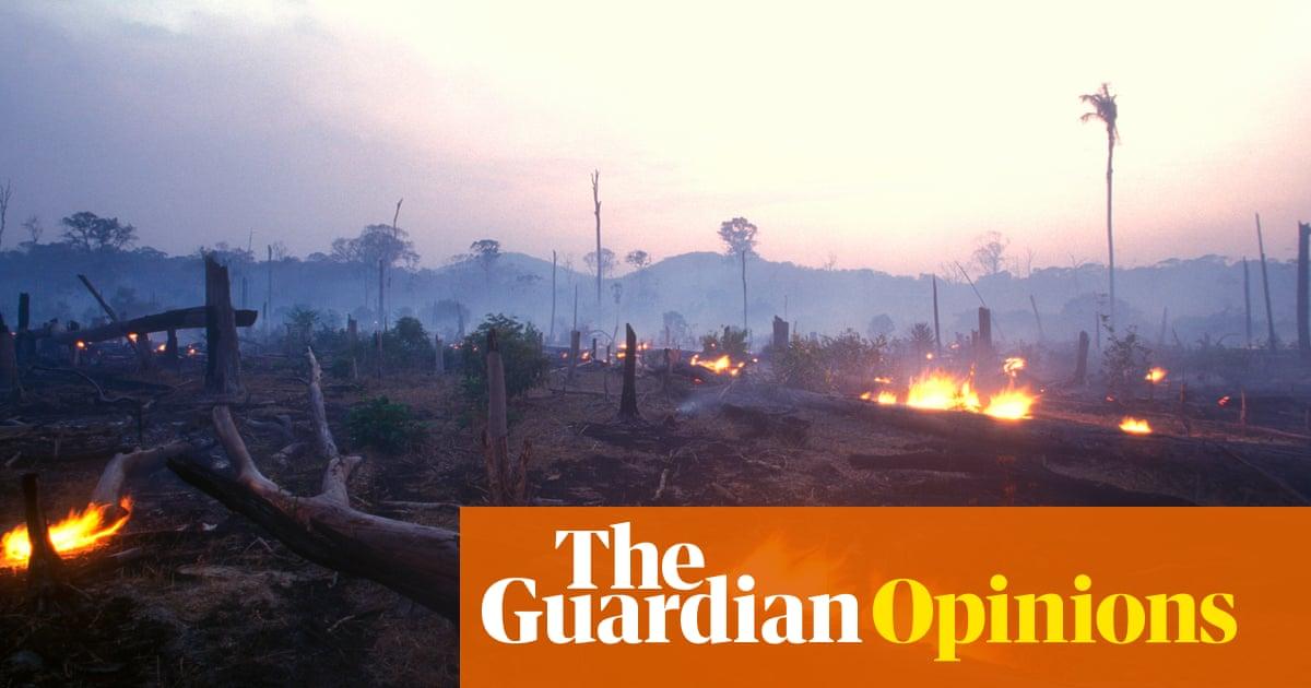 Joe Biden's billions won't stop Brazil destroying the Amazon rainforest