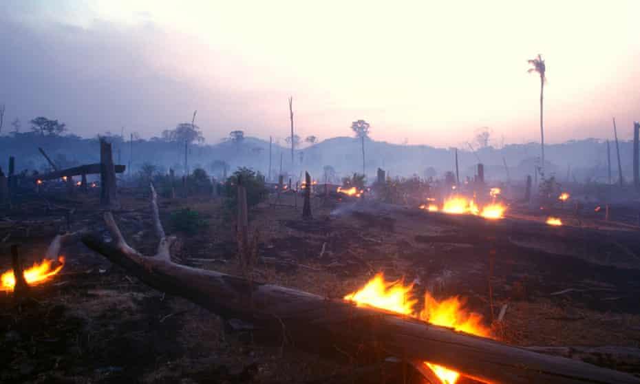 Landscape image of a burning forest at dusk