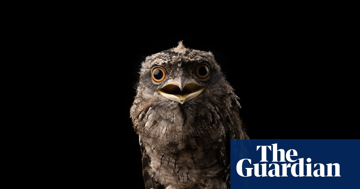 Researchers find frogmouth is world's most Instagrammable bird