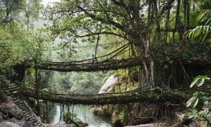 The root bridges of Cherrapunji, India.