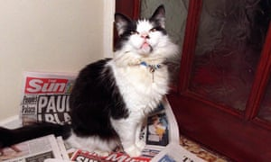 Humphrey, former Downing Street cat