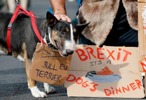 Dog tags: a re-named EU Bull terrier on the march