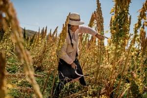 Female quinoa farmer