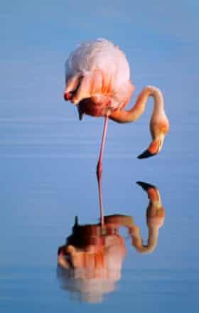 The perfect flamingo pose.