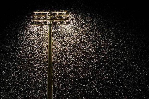 Thousands of moths swarm around floodlights