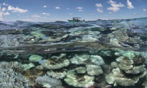 Coral bleaching in the Maldives, captured by the XL Catlin Seaview Survey