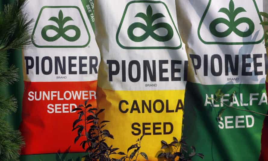 Pioneer seed, manufactured by DuPont