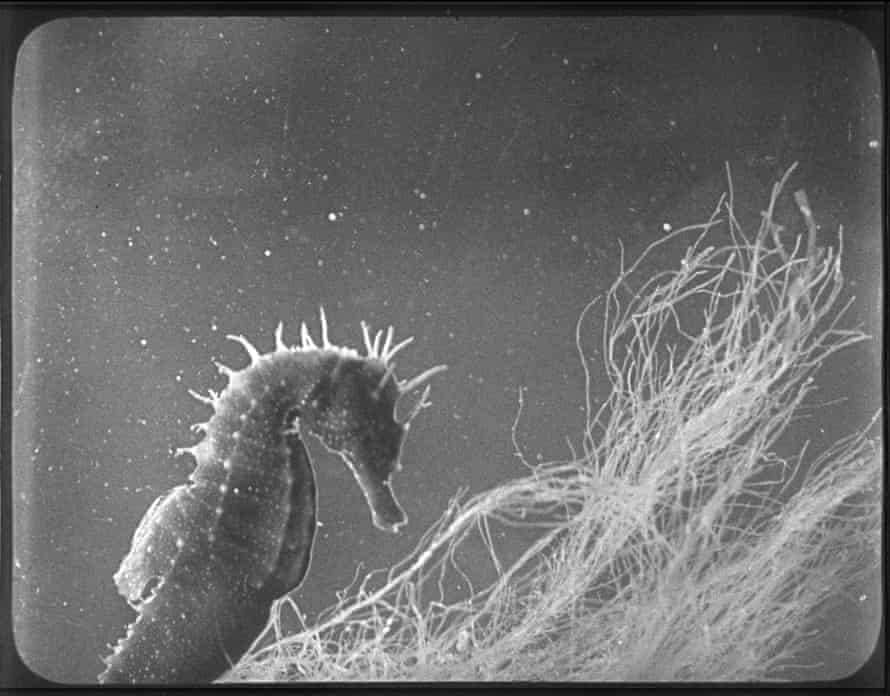 A still from The Seahorse, 1931.