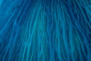 Darley Reef