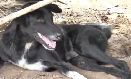 Ping Pong, the disabled Thai dog that rescued a baby buried by its 15-year-old mother.